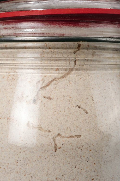Pantry month caterpillar in flour jar